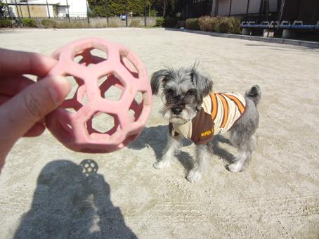 ボール遊び(テディ)