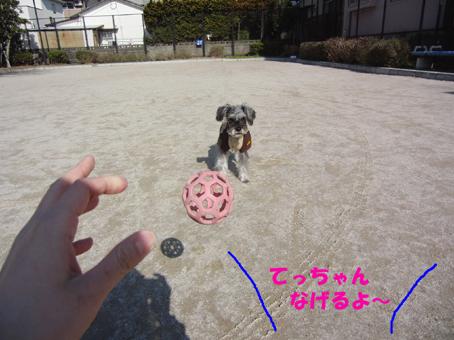 ボール遊び(テディ)2