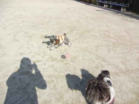 ボール遊び(テディ)1