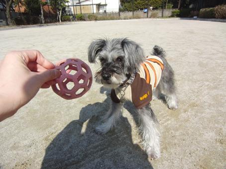 ボール遊び(テディ)6