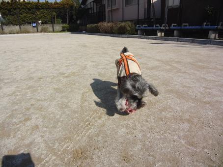 ボール遊び(テディ)3