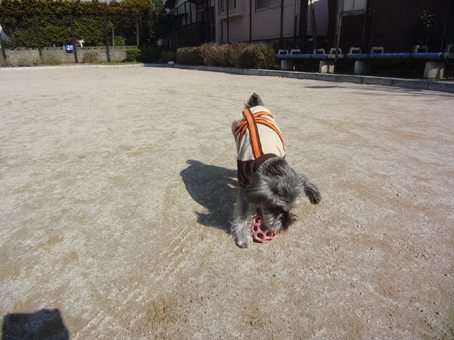 ボール遊び(テディ)4