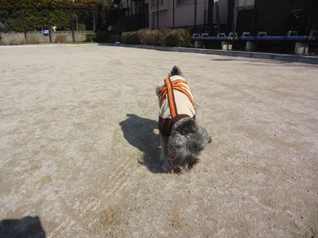 ボール遊び(テディ)5
