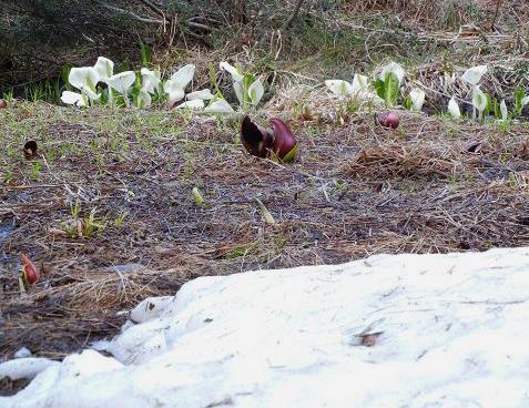 雪と湿地 174