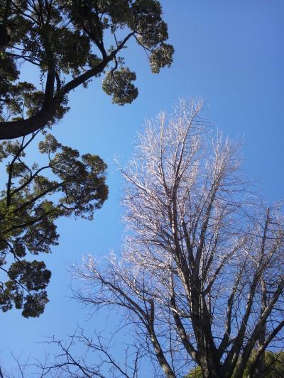 空が高く・・・空が青く・・・気持ちのイイ空だぁ・・・。