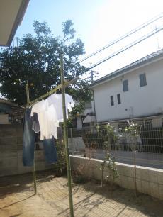 sentakusao