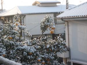 yukikesiki