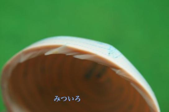 IM_9847.jpg
