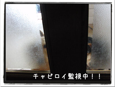 2010011505.jpg