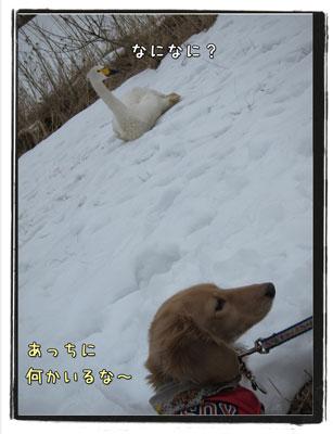 2010031003.jpg