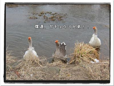 2010031005.jpg
