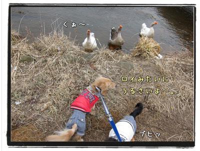 2010031006.jpg