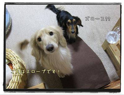 2010031903.jpg