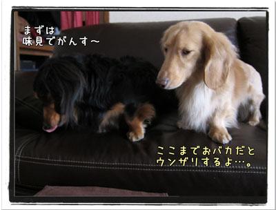 2010032403.jpg