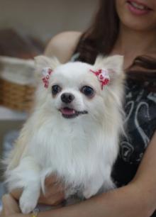 愛犬クラブわん5