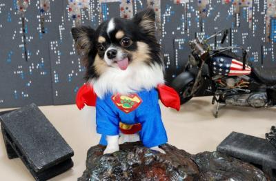 スーパーマン_convert_20110824201752