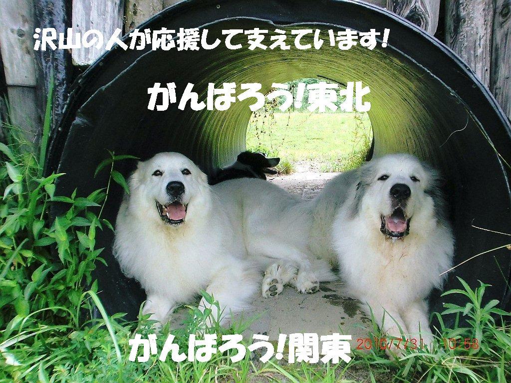 2010_0731_105847-CIMG2023edit.jpg