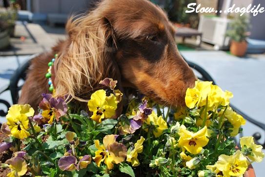 お花をパクパク