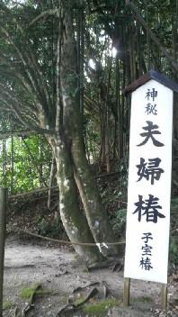 八重垣神社の夫婦椿