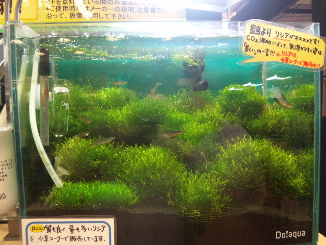 Remixナゴヤドーム前イオン店レイアウト3