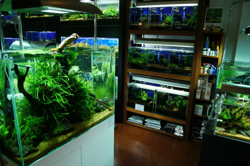 Aqua Revue店内写真2