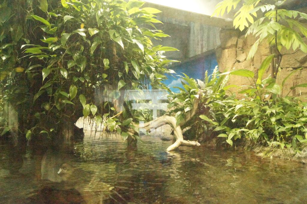 熱帯水槽4