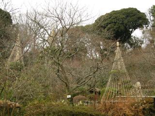 201101百草園5