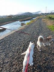 11月散歩
