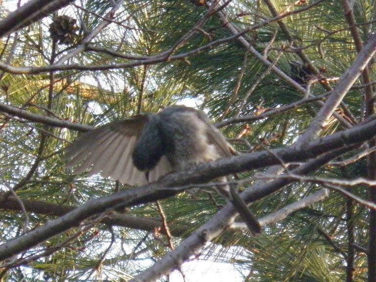 福岡 鳥の来る庭