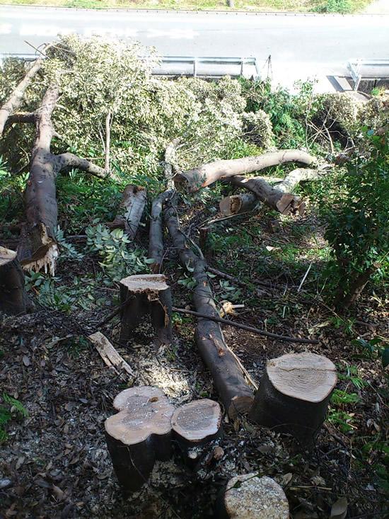 大木伐採 福岡