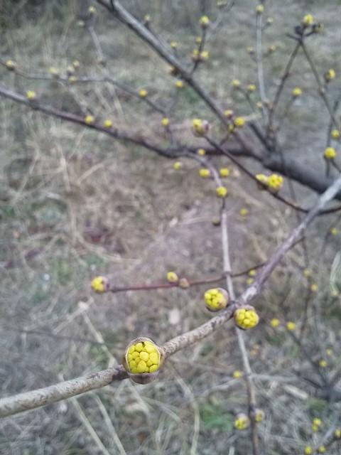 福岡 植木屋 花