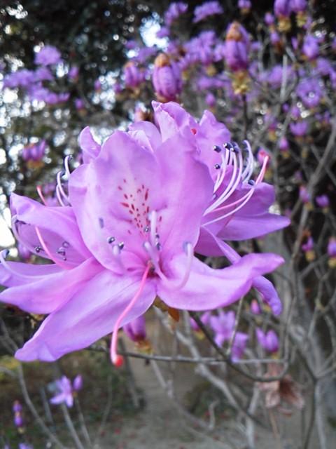筑紫野市 庭木剪定 植木屋
