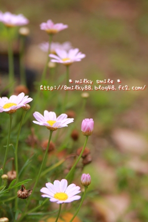 IMG_6454_20110527080544.jpeg
