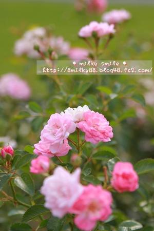 IMG_6657_20110925174324.jpeg