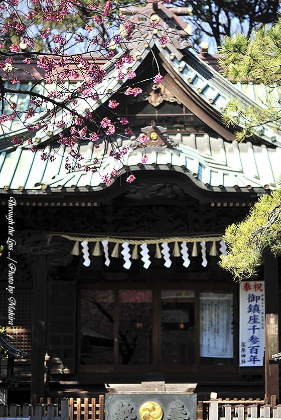 荏原神社1