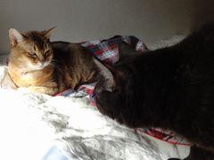 メグとヨモギ