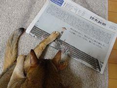 新聞とヨモギ