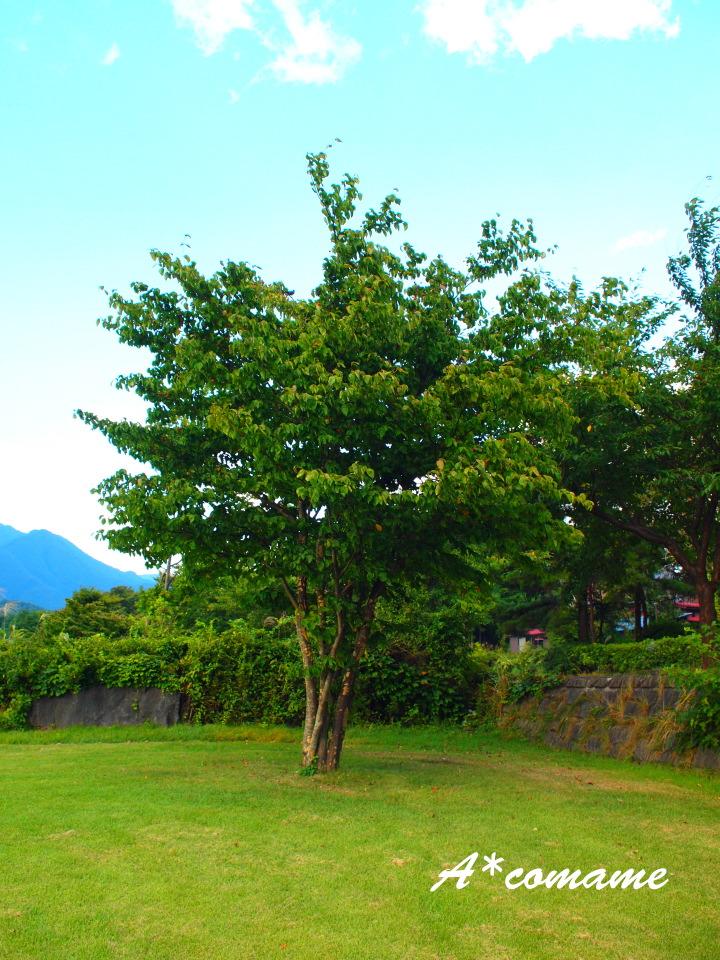 湖畔の木1
