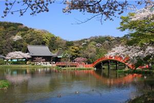 shoumyoji sakura