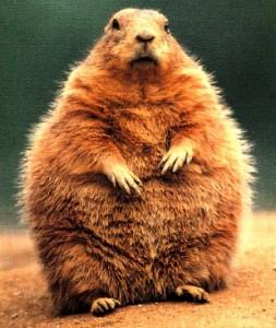 groundhog-enorme-toute-grosse-253x300.jpg