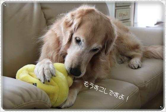 2011,3,16おもちゃ遊び7