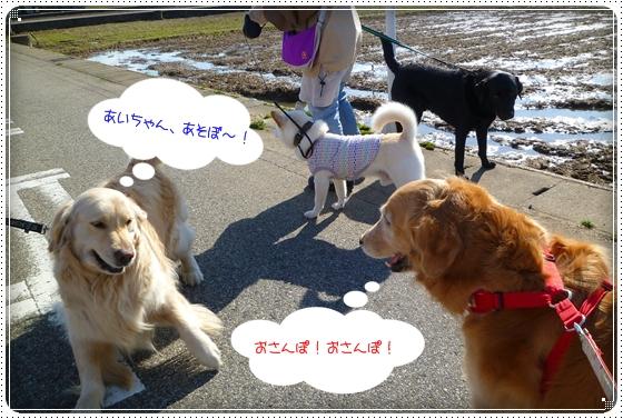 2011,3,23お散歩11