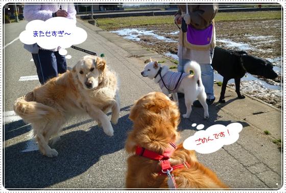 2011,3,23お散歩4