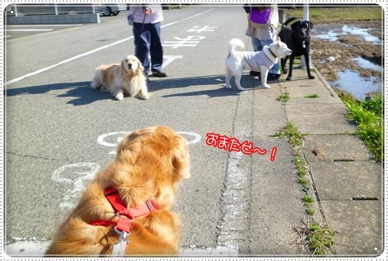 2011,3,23お散歩3