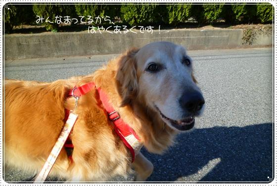 2011,3,23お散歩2