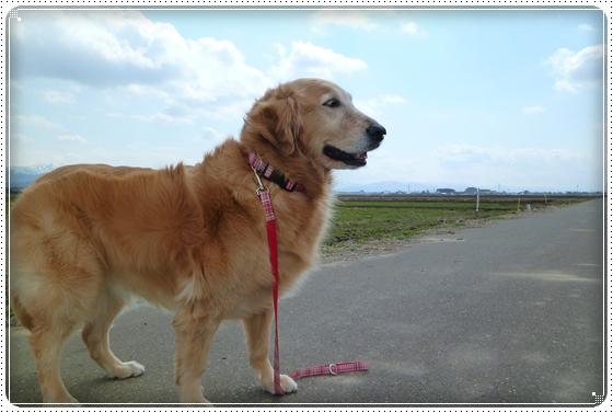 2011,3,26お散歩5