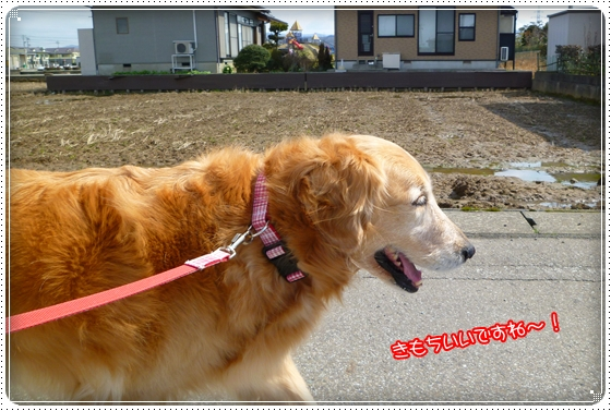 2011,3,26お散歩2
