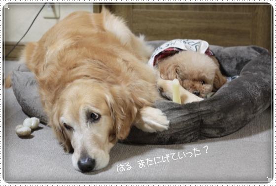 2011,3,26お散歩12
