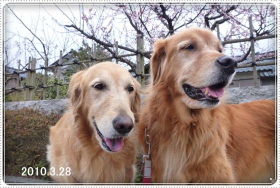 2011,3,26お散歩11