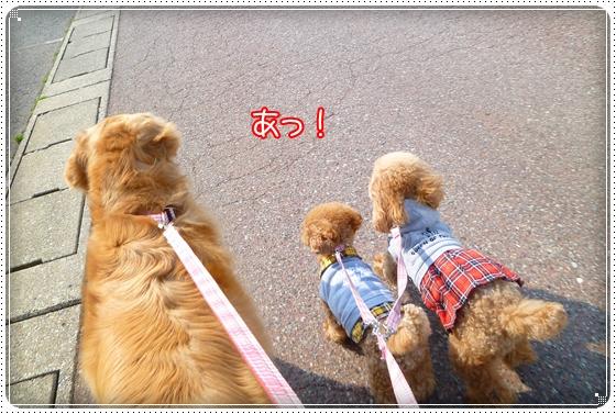 2011,3,29お散歩1